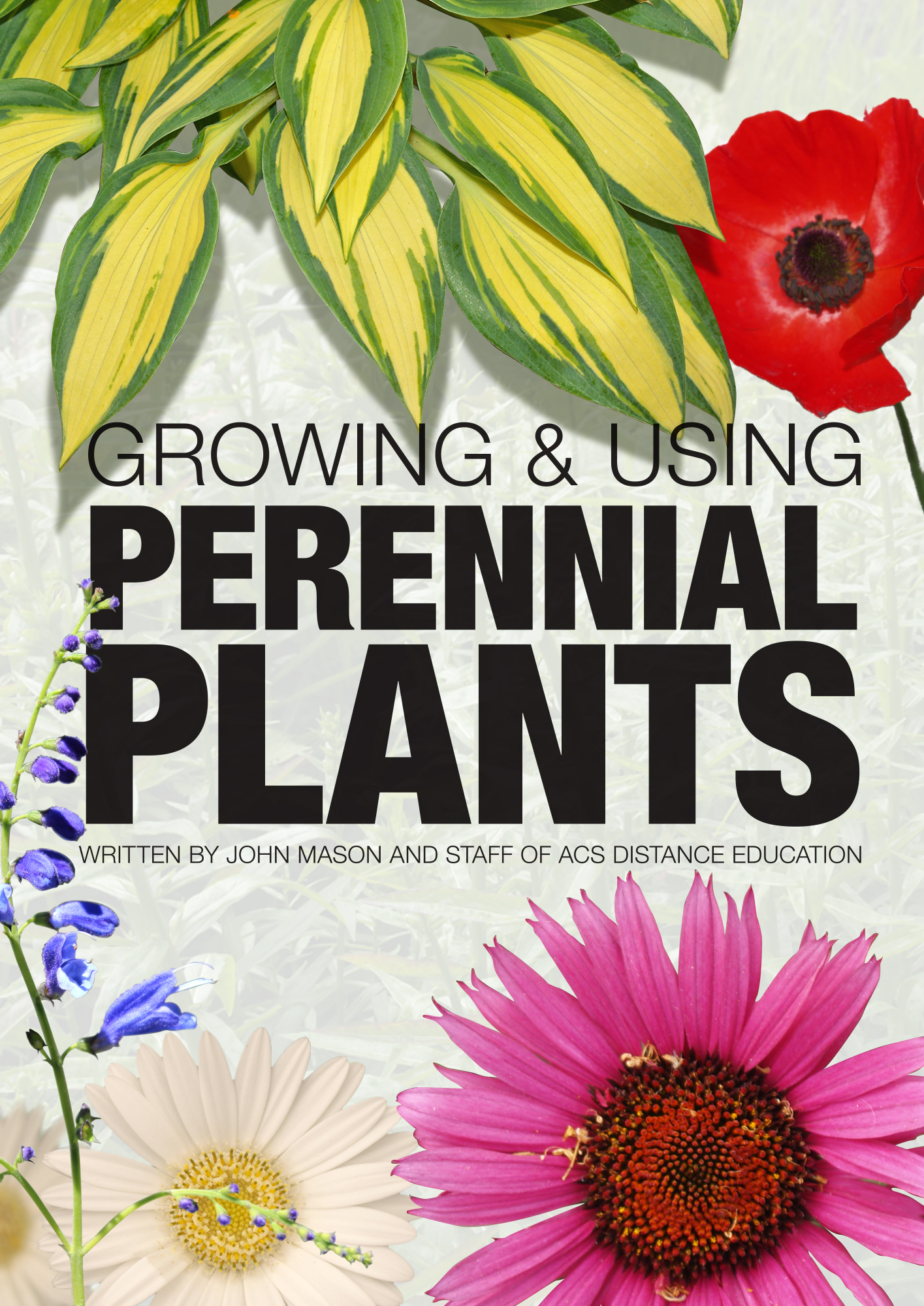 Acs distance education the latest from our multidisciplinary maggi brown is one of the tutors at acs distance education and offers the following useful tips on perennials fandeluxe Images